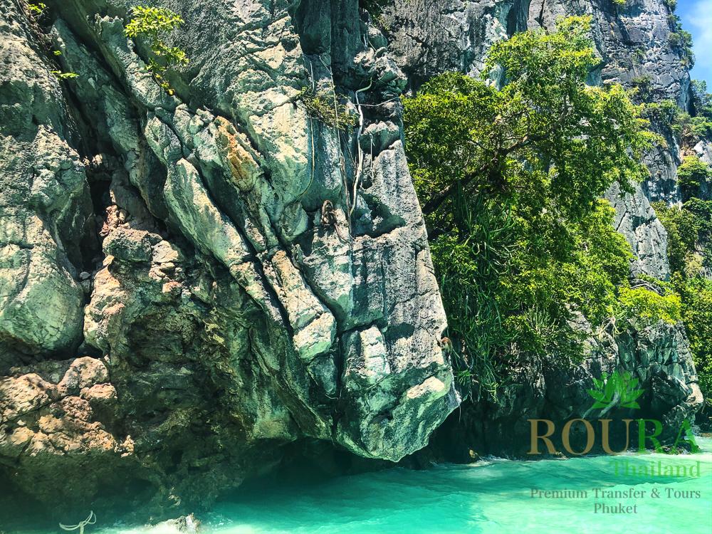 ピピ島ロングテールボート 猿