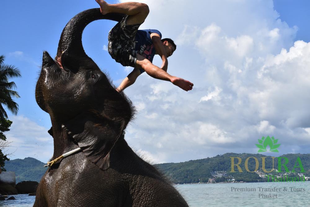 プーケットのビーチで象と遊ぶ!ラッキービーチの2020年最新版 象と水浴び